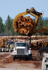 claw loading logs onto lumber trucks