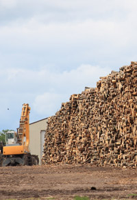 stacks of logs at lumber mill
