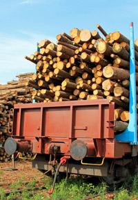 logs on train cars