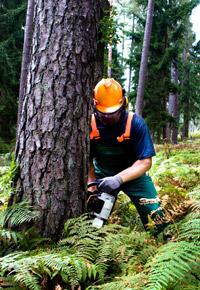 lumberjack cutting down a tree