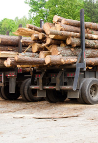 logging trucks loaded with logs